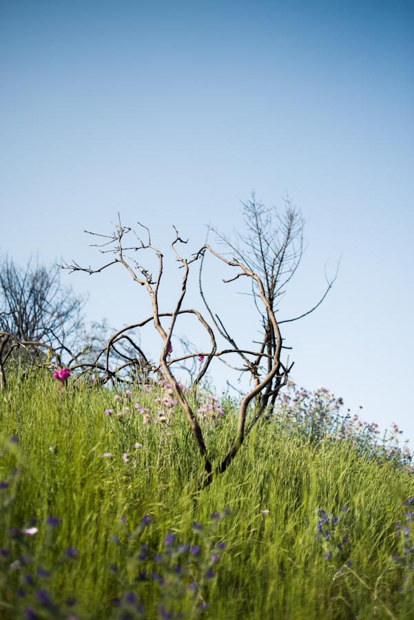 Mirador de Montbau (Parc de Collserola)